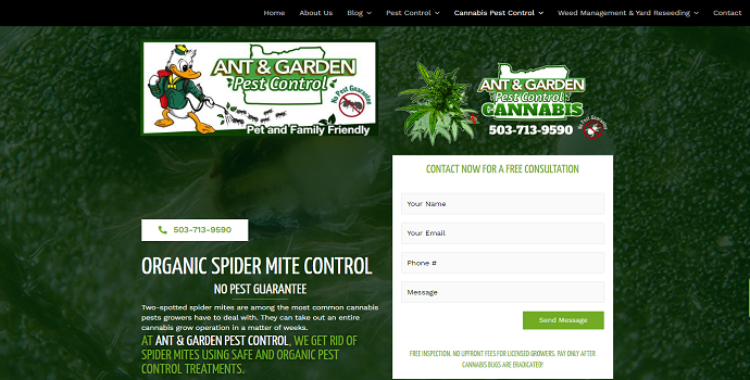 How to eradicate cannabis spider mites organically